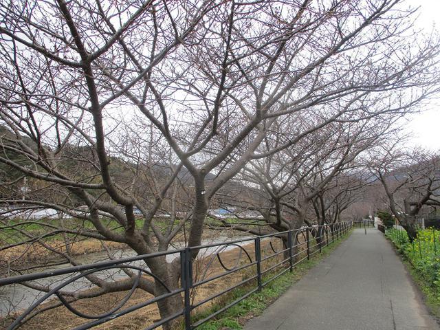 画像17: 来年冬の企画素材を探して静岡県の山を歩いてみました!