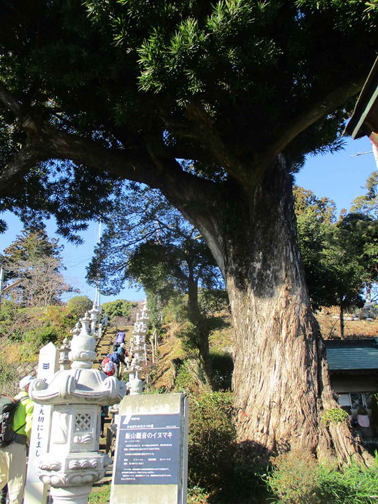 画像2: 1月21日に岡田ガイドのコースで 丹沢白山 へ行ってきました♪