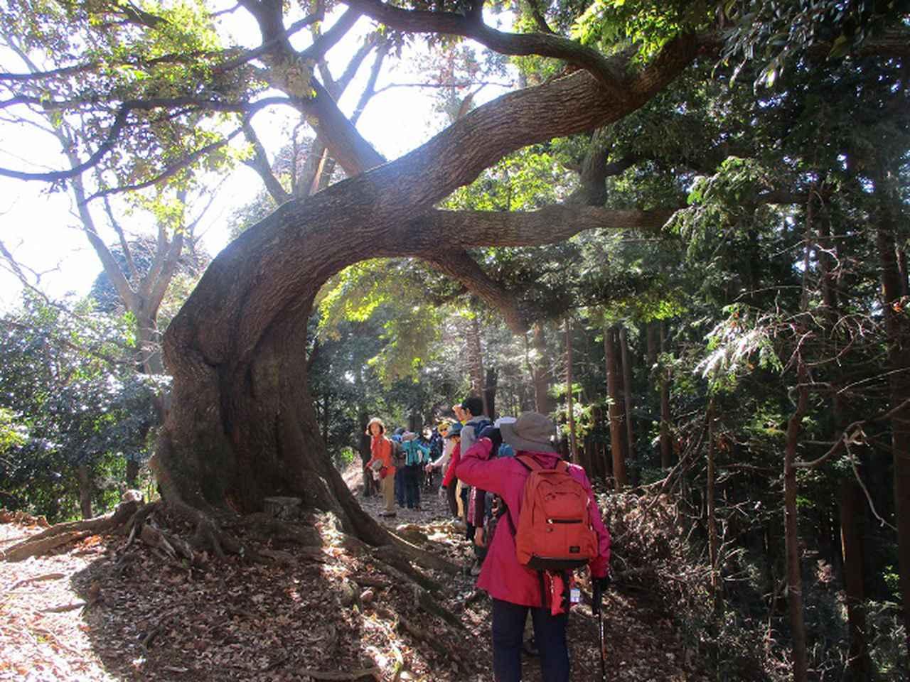 画像8: 1月21日に岡田ガイドのコースで 丹沢白山 へ行ってきました♪