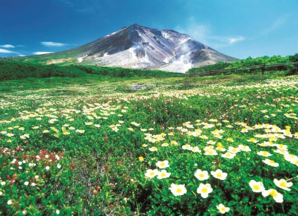 画像: 北海道・旭岳 ロープウェイ駅から歩ける高山植物の名所・裾合平