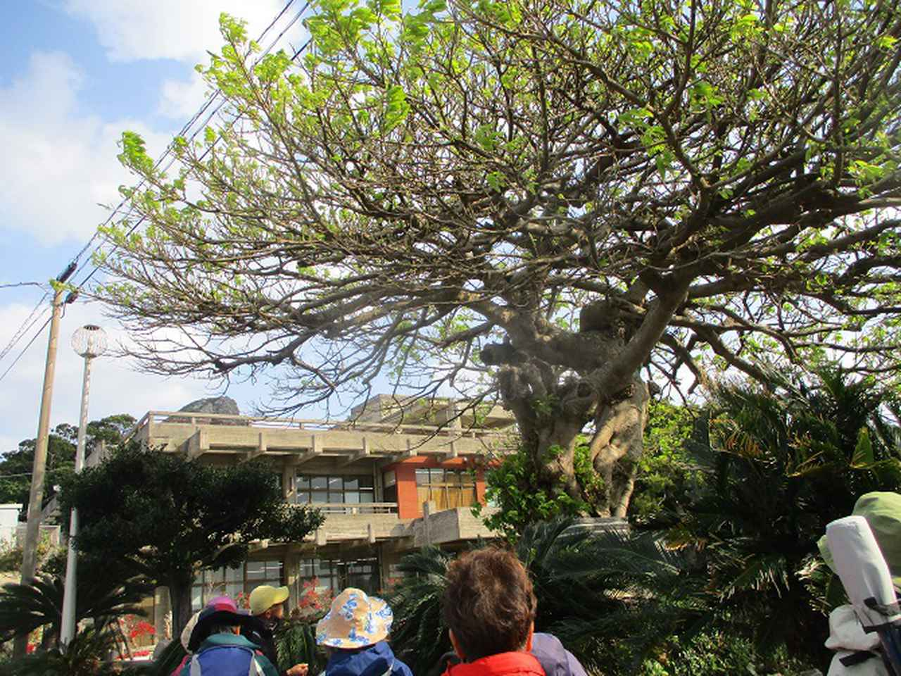 画像10: 岡田ガイドのコースで、1月29日から31日に沖縄へ行って来ました♪