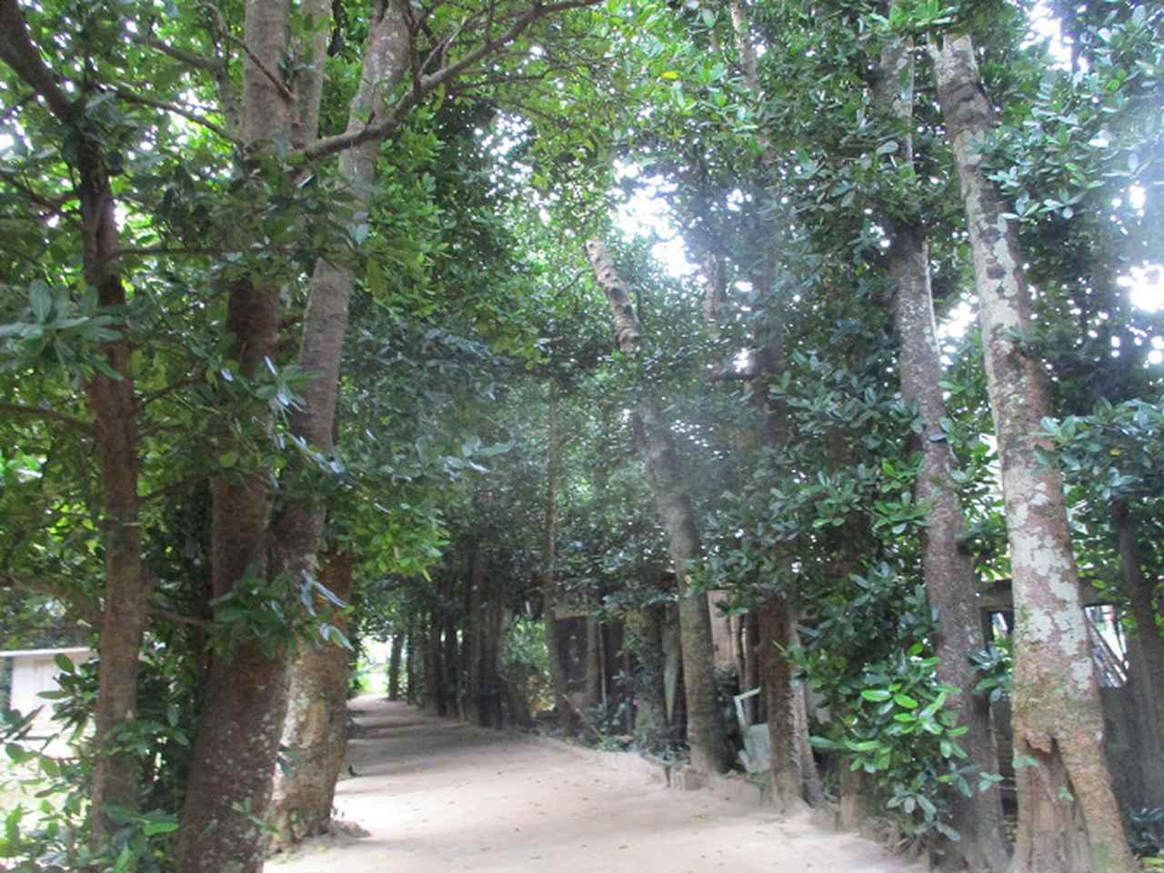 画像14: 岡田ガイドのコースで、1月29日から31日に沖縄へ行って来ました♪
