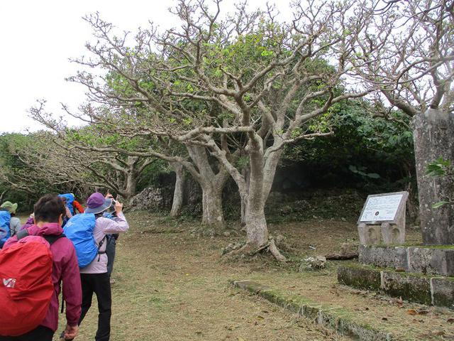 画像5: 岡田ガイドのコースで1月29日から31日に 沖縄 へ行って来ました♪