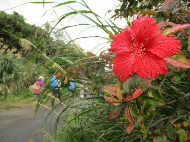 画像1: 岡田ガイドのコースで1月29日から31日に 沖縄 へ行って来ました♪