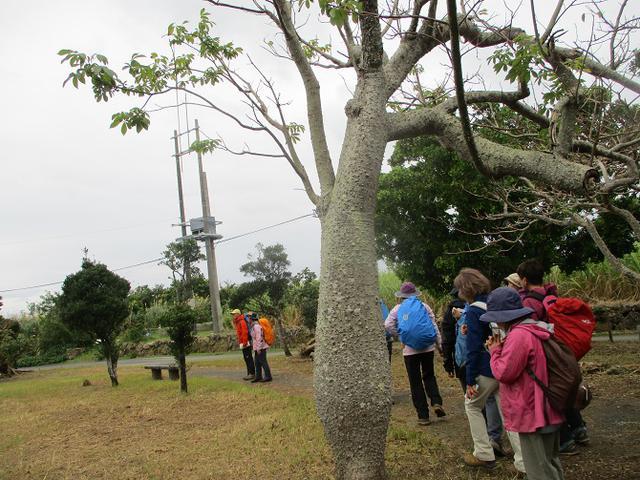画像4: 岡田ガイドのコースで1月29日から31日に 沖縄 へ行って来ました♪
