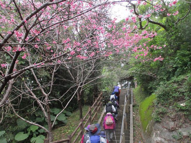 画像4: 1月29日~31日で山旅会 沖縄 ツアーに行ってきました!