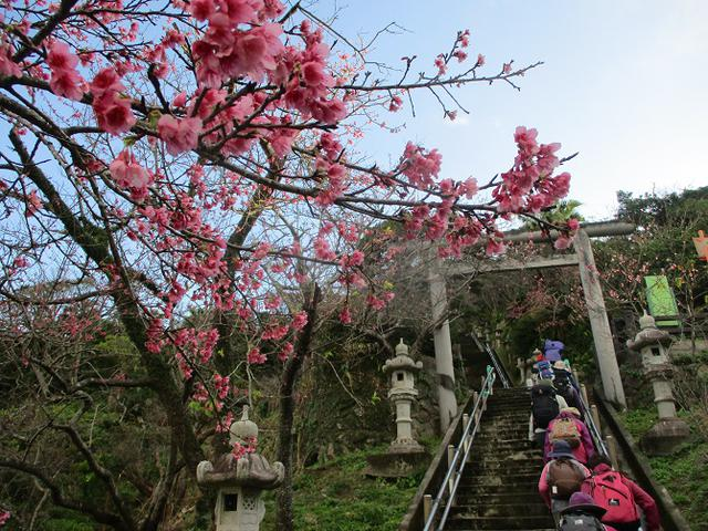 画像1: 1月29日~31日で山旅会 沖縄 ツアーに行ってきました!