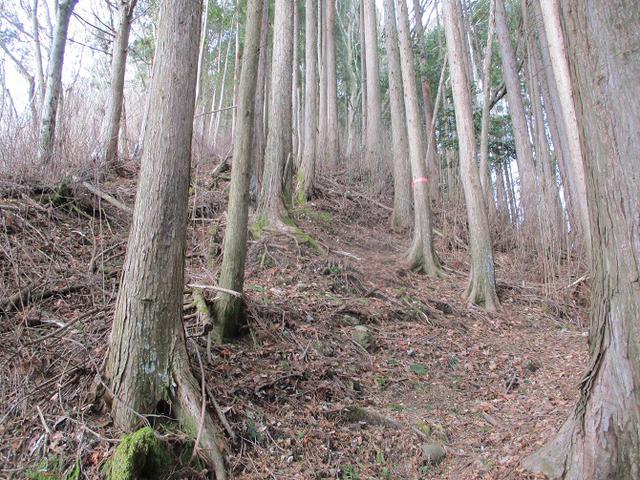 画像6: 来年冬の企画素材を探して山梨県南部の山 貫ヶ岳 を歩いてみました!
