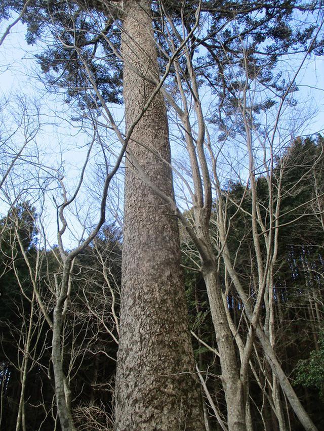 画像8: 来年冬の企画素材を探して山梨県南部の山 貫ヶ岳 を歩いてみました!