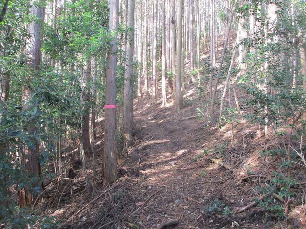 画像5: 来年冬の企画素材を探して山梨県南部の山 貫ヶ岳 を歩いてみました!