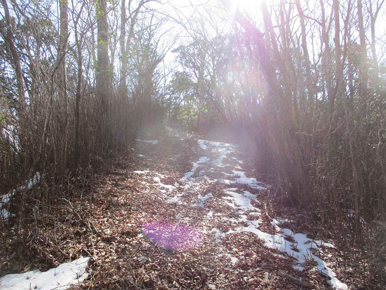 画像10: 来年冬の企画素材を探して山梨県南部の山 貫ヶ岳 を歩いてみました!