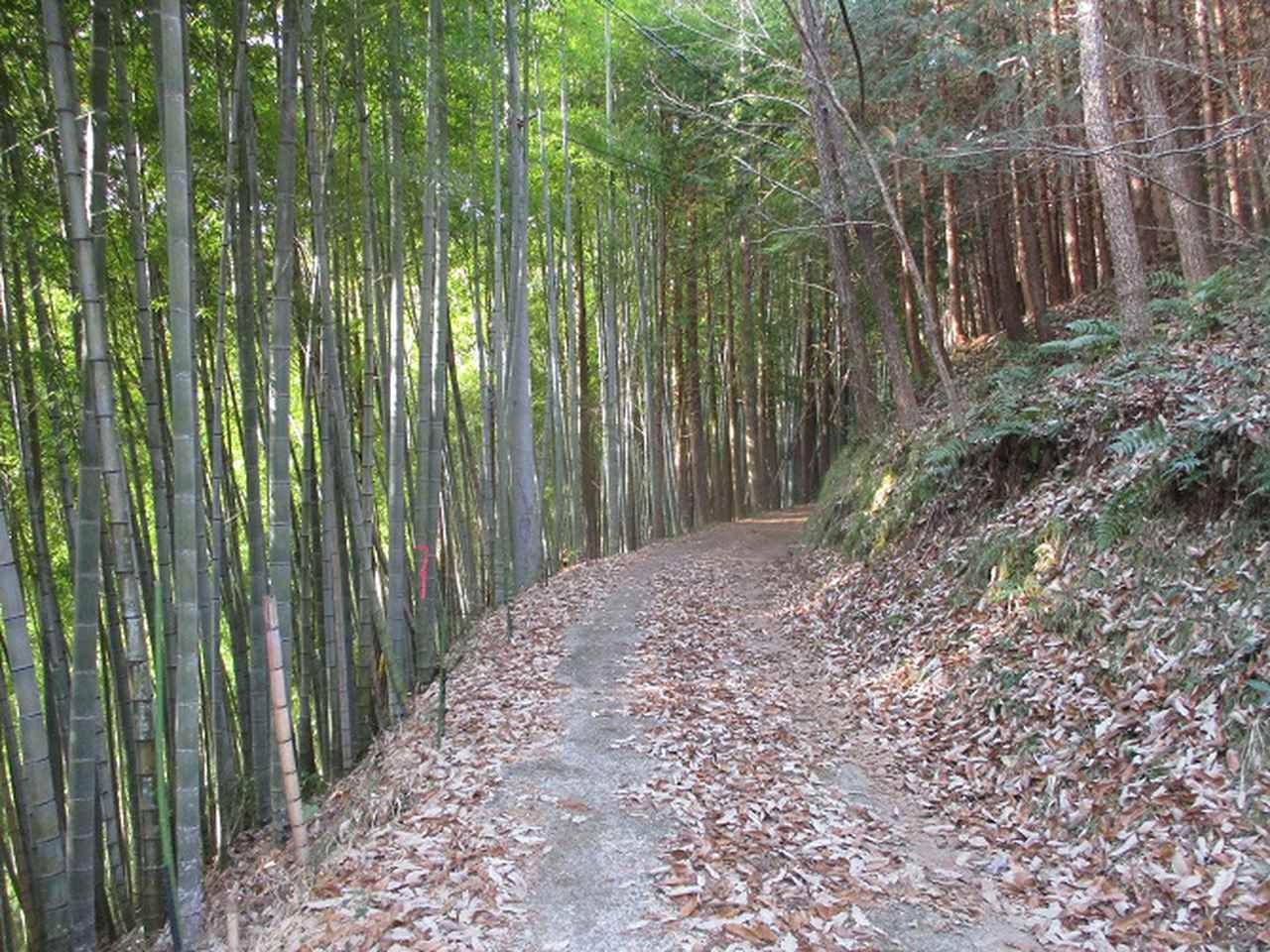 画像2: 来年冬の企画素材を探して山梨県南部の山 貫ヶ岳 を歩いてみました!