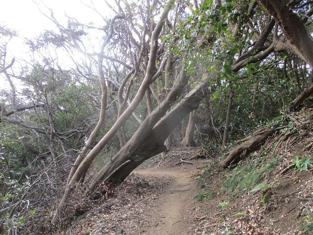 画像11: 2月の山旅会 三浦富士 の下見に行ってきました!