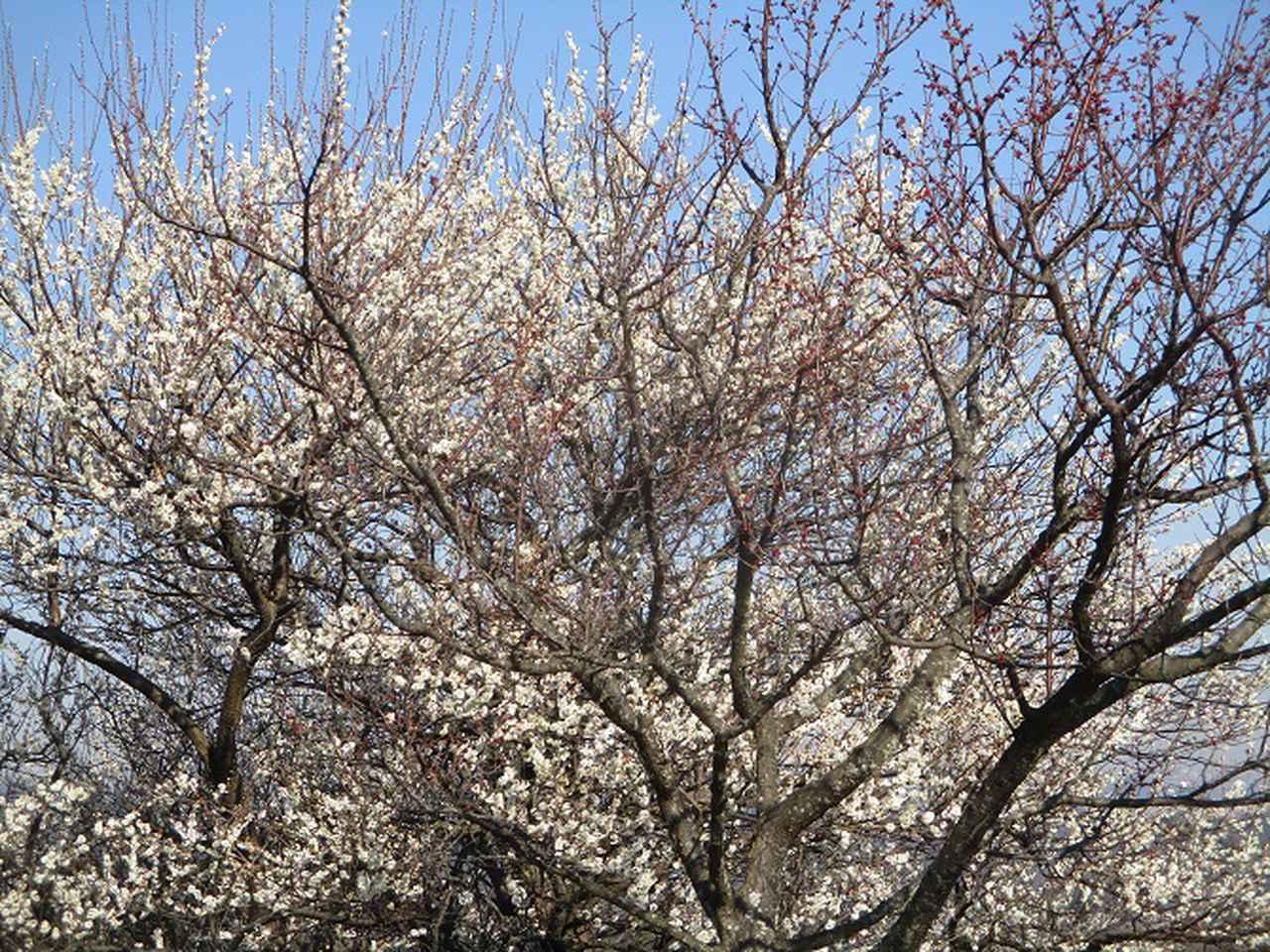 画像2: 2月8日に山旅会 田浦から乳頭山・観音塚 ツアーに行ってきました!