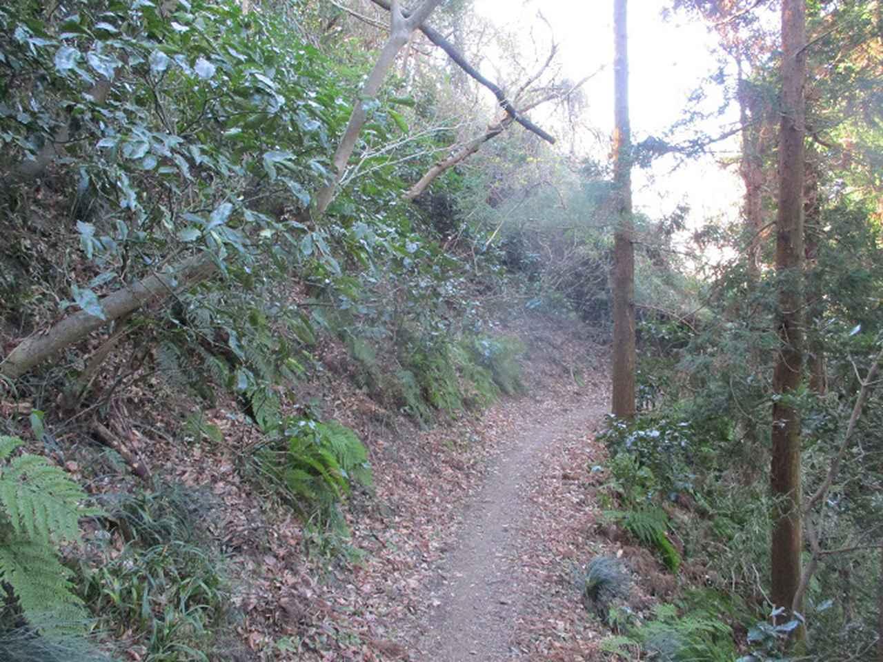 画像10: 先日、山旅会 仙元山から茅塚 ツアーの下見に行ってきました!