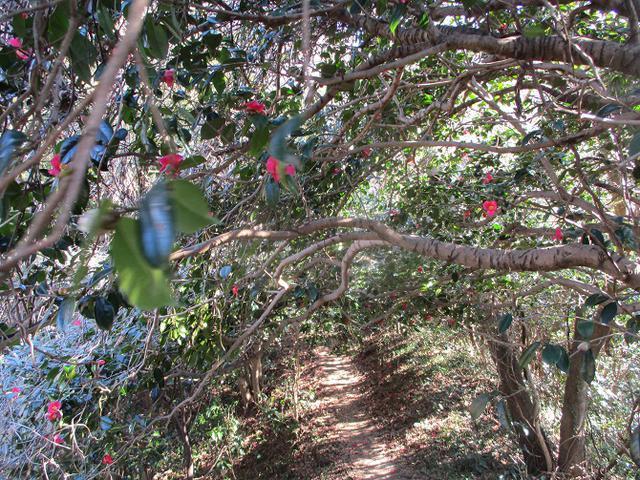 画像8: 先日、山旅会 仙元山から茅塚 ツアーの下見に行ってきました!