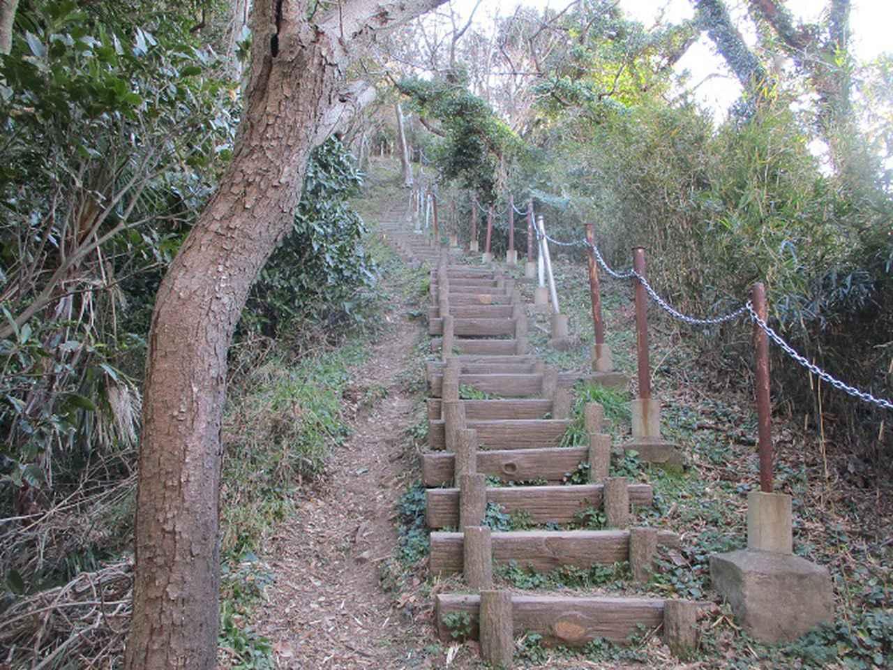画像4: 先日、山旅会 仙元山から茅塚 ツアーの下見に行ってきました!