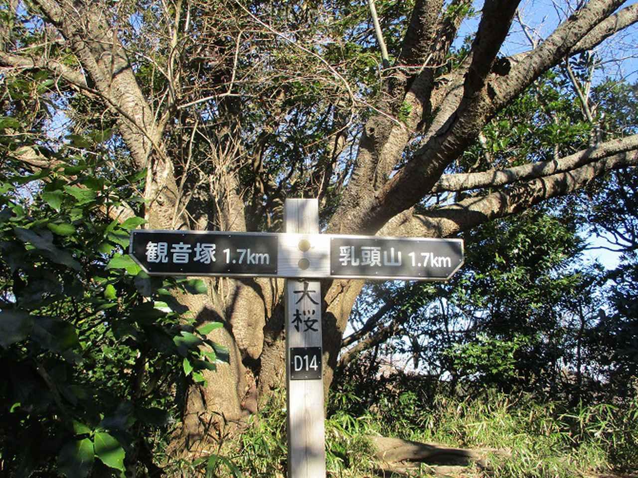 画像7: 先日、山旅会 仙元山から茅塚 ツアーの下見に行ってきました!