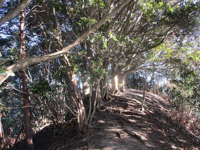 画像6: 先日、山旅会 仙元山から茅塚 ツアーの下見に行ってきました!