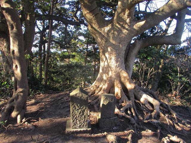 画像5: 先日、山旅会 仙元山から茅塚 ツアーの下見に行ってきました!