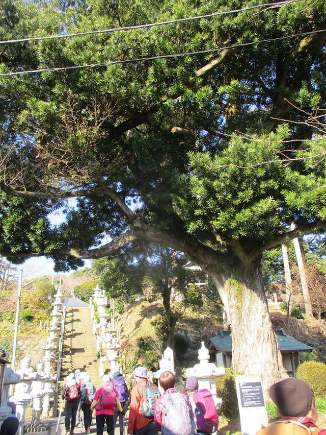 画像2: 2月5日に山旅会 丹沢白山 ツアーに行ってきました!