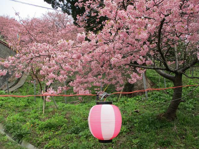 画像4: 来年冬の企画のネタを探して 松田山 に行ってきました!