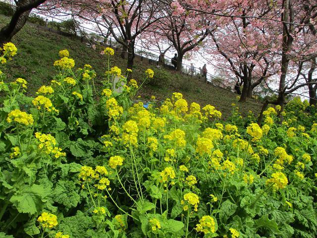 画像7: 来年冬の企画のネタを探して 松田山 に行ってきました!