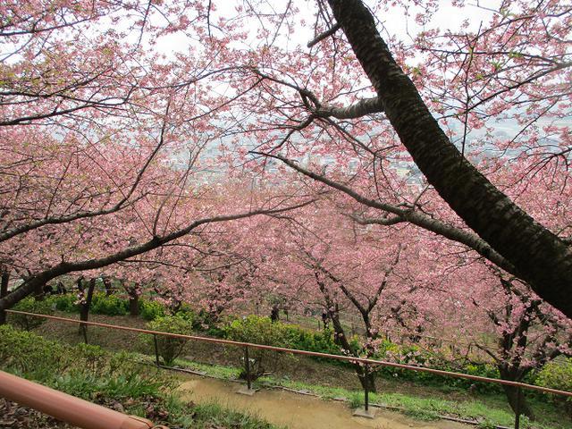 画像8: 来年冬の企画のネタを探して 松田山 に行ってきました!