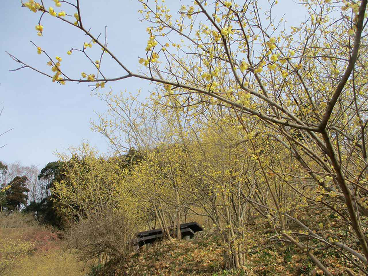 画像2: 来年冬の企画のネタを探して 松田山 に行ってきました!