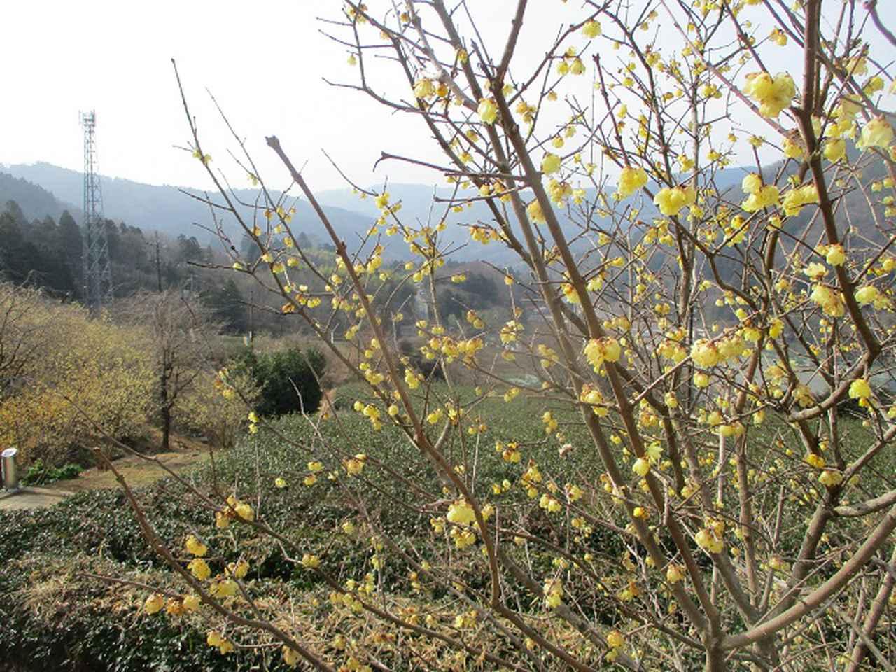 画像1: 来年冬の企画のネタを探して 松田山 に行ってきました!