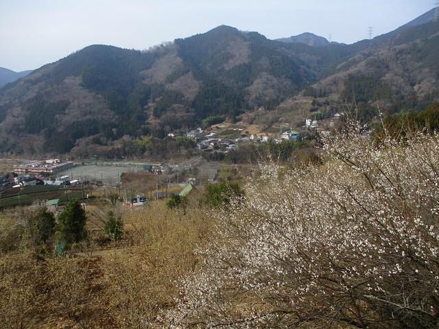 画像3: 来年冬の企画のネタを探して 松田山 に行ってきました!