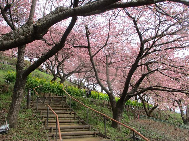 画像6: 来年冬の企画のネタを探して 松田山 に行ってきました!