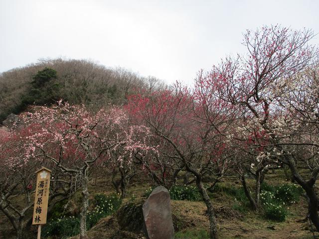 画像2: 2月の山旅会 湯河原城山 の下見に行ってきました!