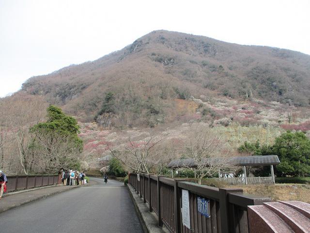 画像1: 2月の山旅会 湯河原城山 の下見に行ってきました!