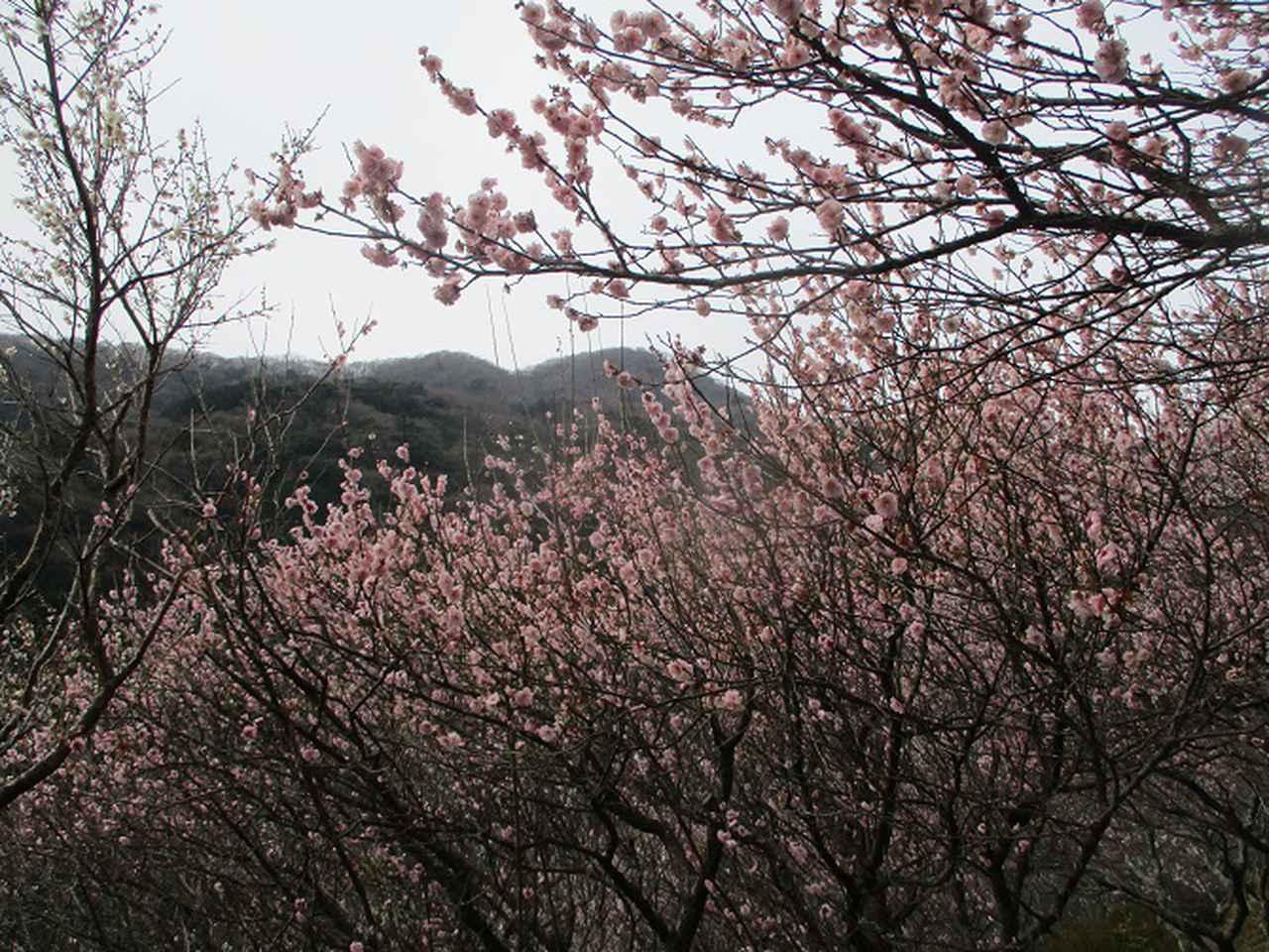 画像3: 2月の山旅会 湯河原城山 の下見に行ってきました!