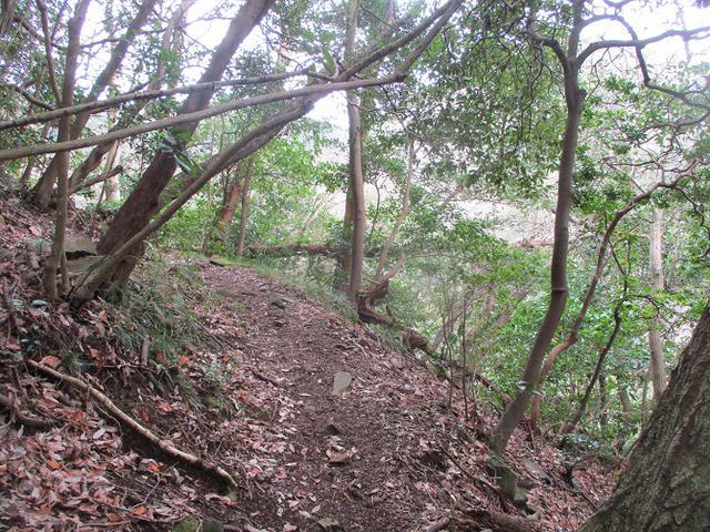 画像6: 2月の山旅会 湯河原城山 の下見に行ってきました!