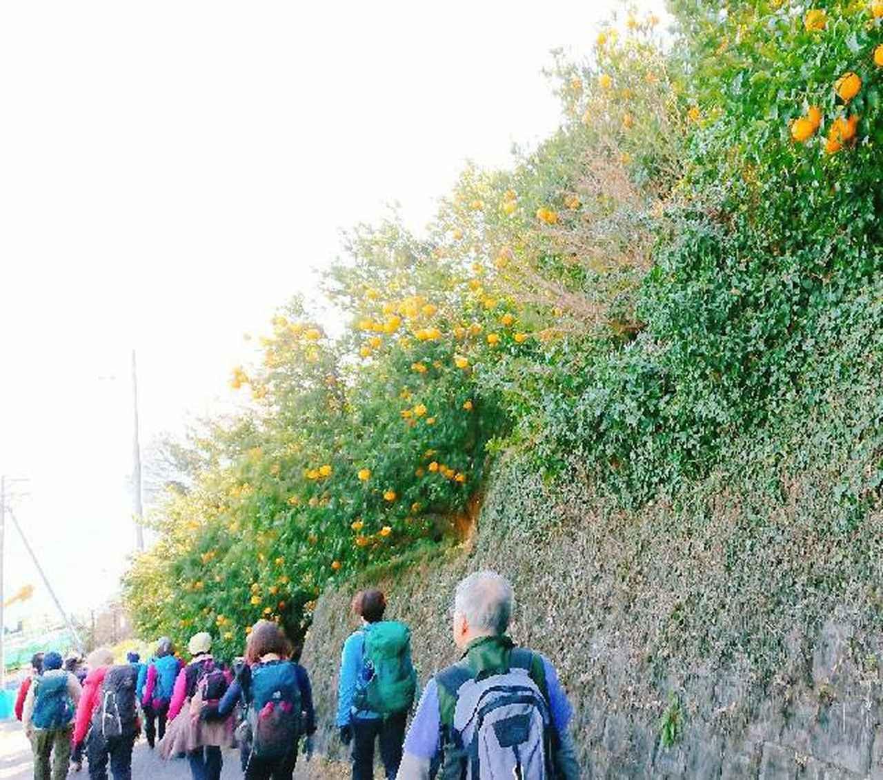 画像9: 2月11日に宮下ガイドのコースで 浜石岳 へ行って来ました♪