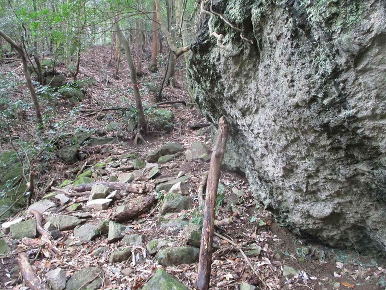 画像5: 2月の山旅会 湯河原城山 の下見に行ってきました!