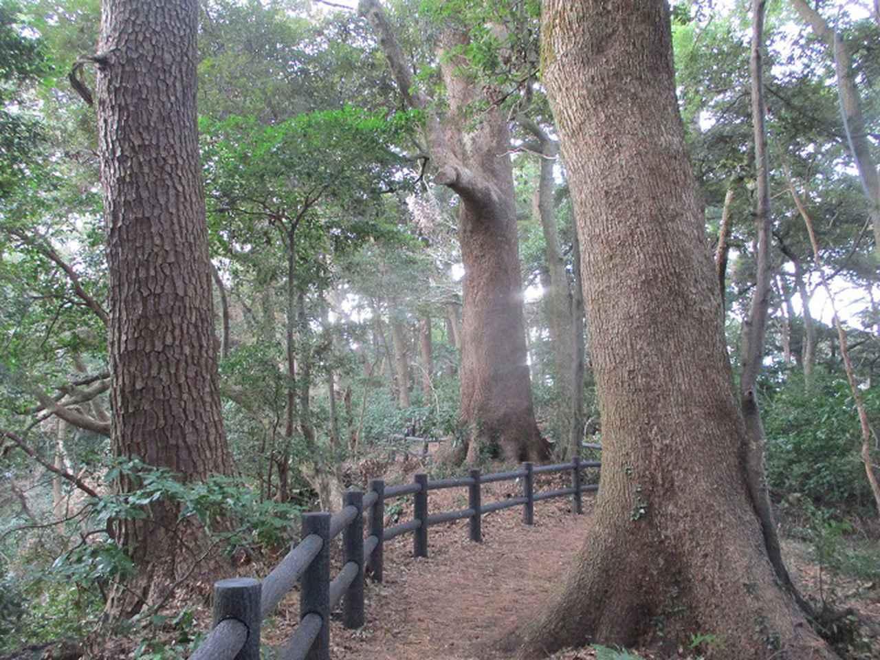 画像2: 2月の山旅会 真鶴半島ハイクと湯河原梅林 の下見に行ってきました!