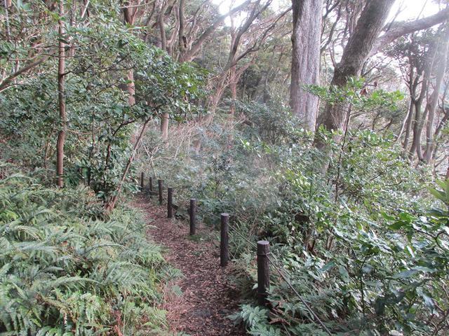 画像3: 2月の山旅会 真鶴半島ハイクと湯河原梅林 の下見に行ってきました!