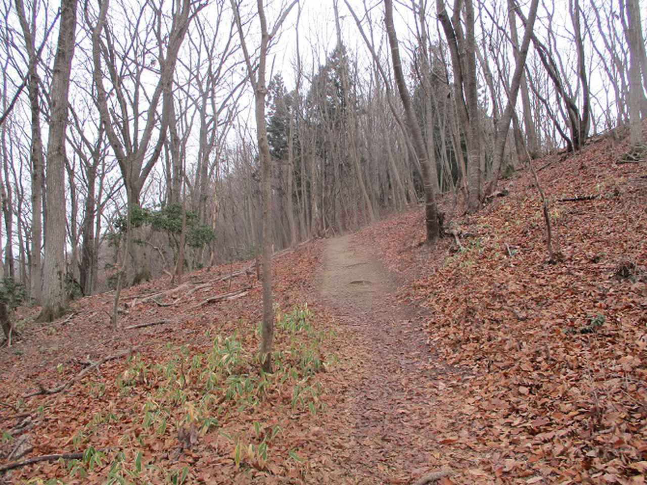 画像3: 来年冬の企画素材を探して長瀞アルプスを歩いてきました!