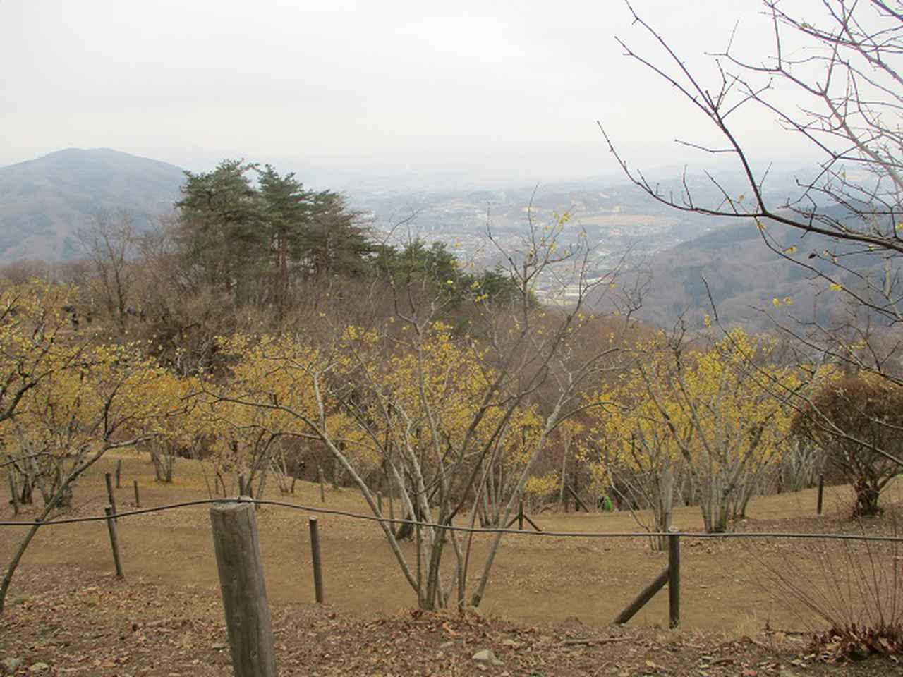 画像10: 来年冬の企画素材を探して長瀞アルプスを歩いてきました!