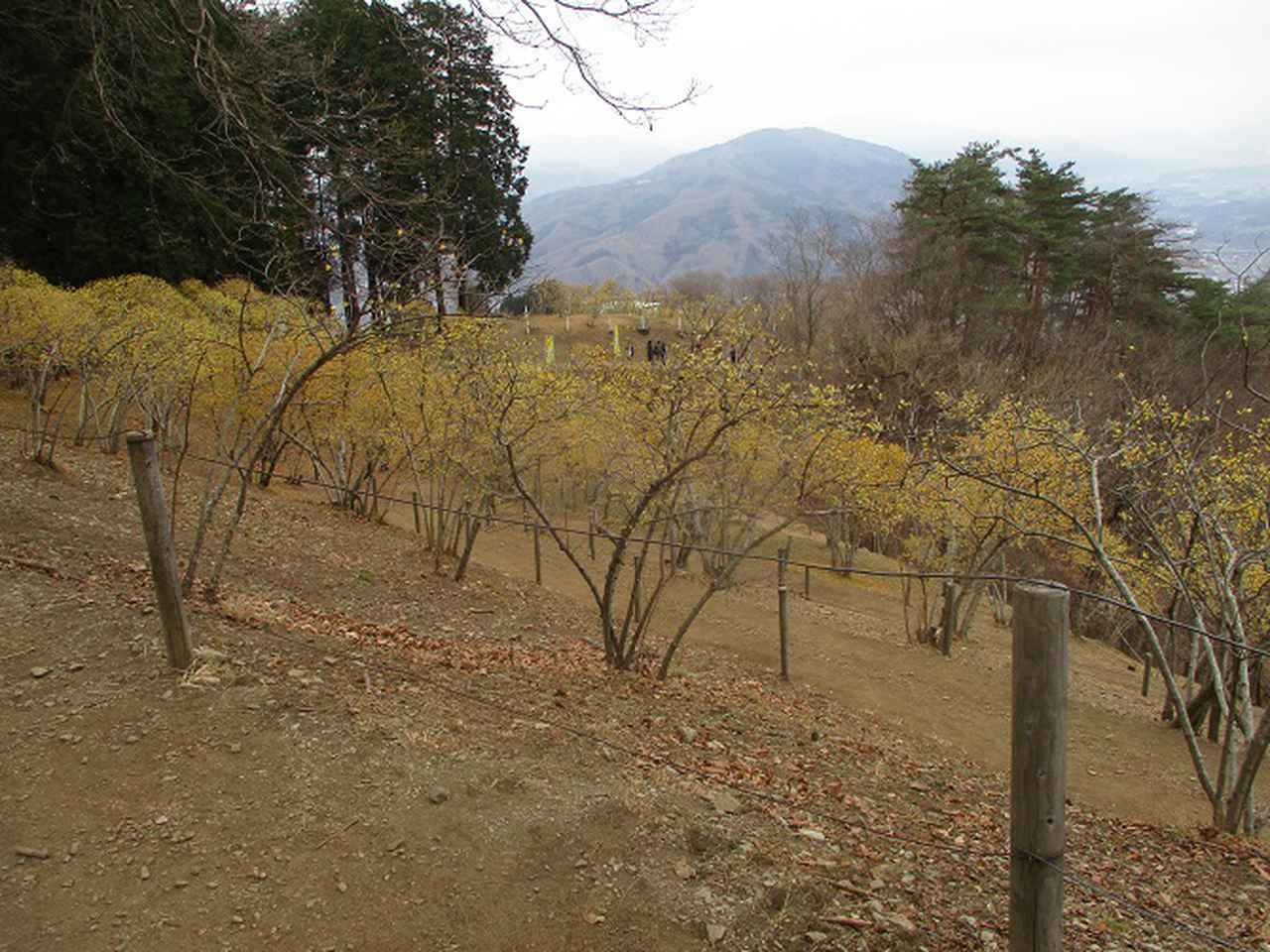 画像9: 来年冬の企画素材を探して長瀞アルプスを歩いてきました!
