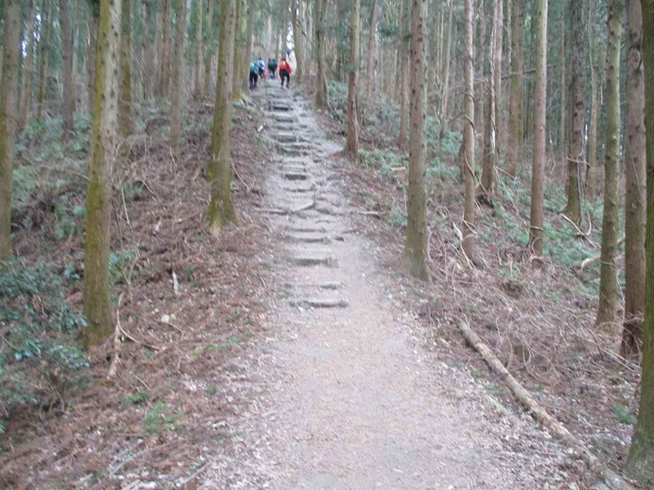 画像7: 来年冬の企画素材を探して長瀞アルプスを歩いてきました!