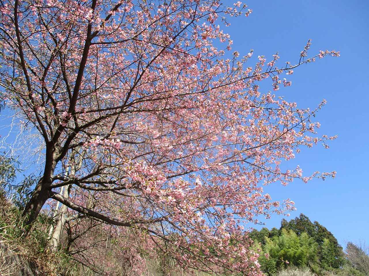 画像8: 2月17日に山旅会 シダンゴ山 ツアーにいってきました!