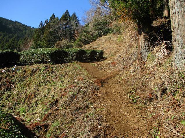 画像1: 2月17日に山旅会 シダンゴ山 ツアーにいってきました!