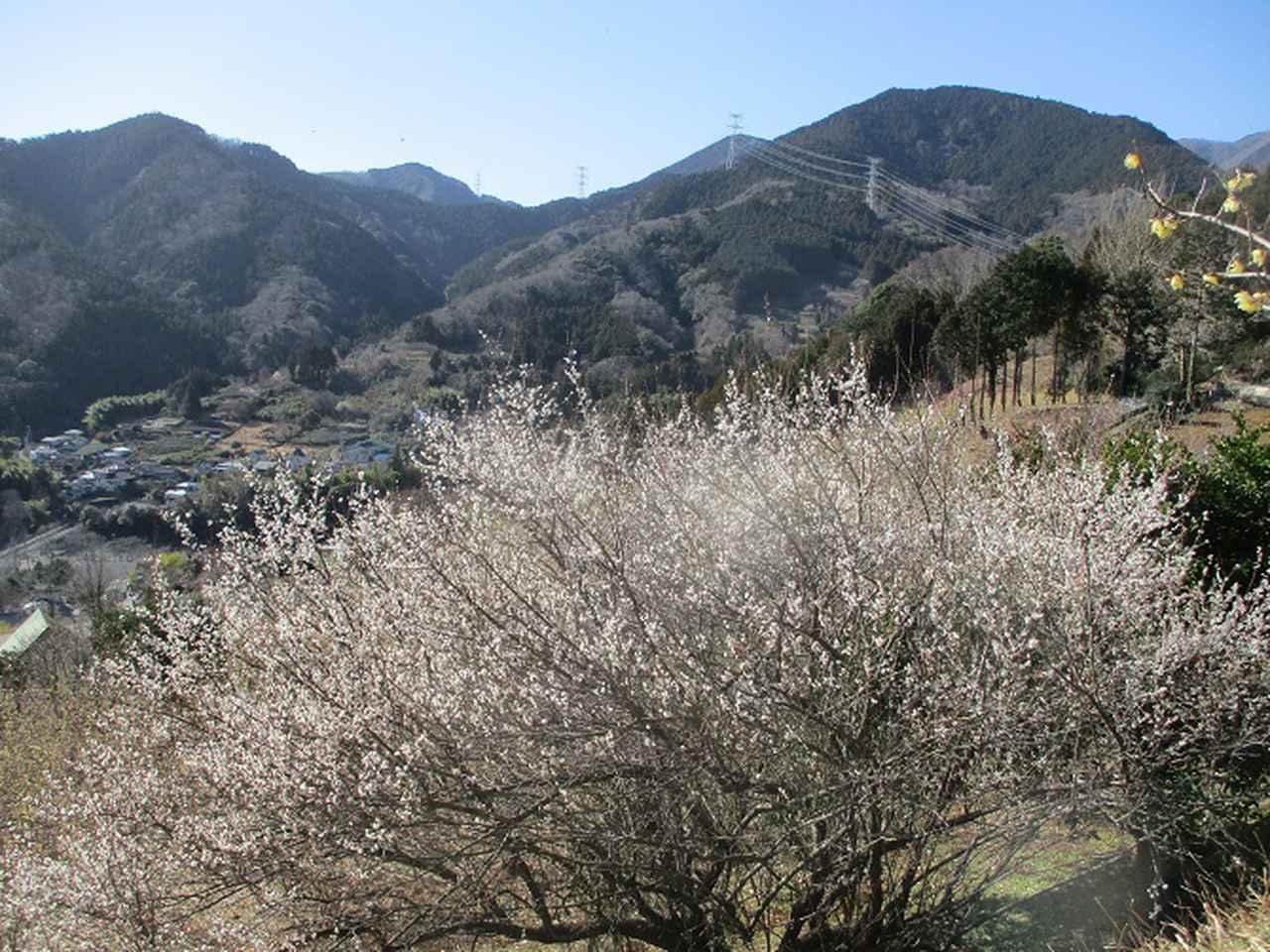 画像9: 2月17日に山旅会 シダンゴ山 ツアーにいってきました!
