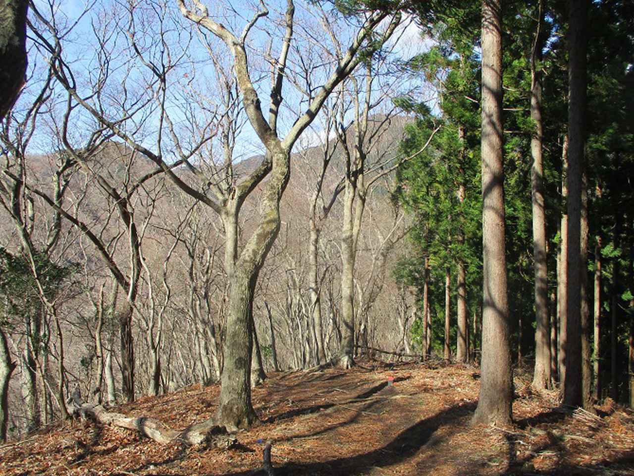 画像2: 2月17日に山旅会 シダンゴ山 ツアーにいってきました!