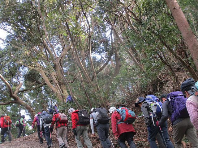 画像2: 2月12日に岡田ガイドのコースで千葉の 御殿山 へ行ってきました♪