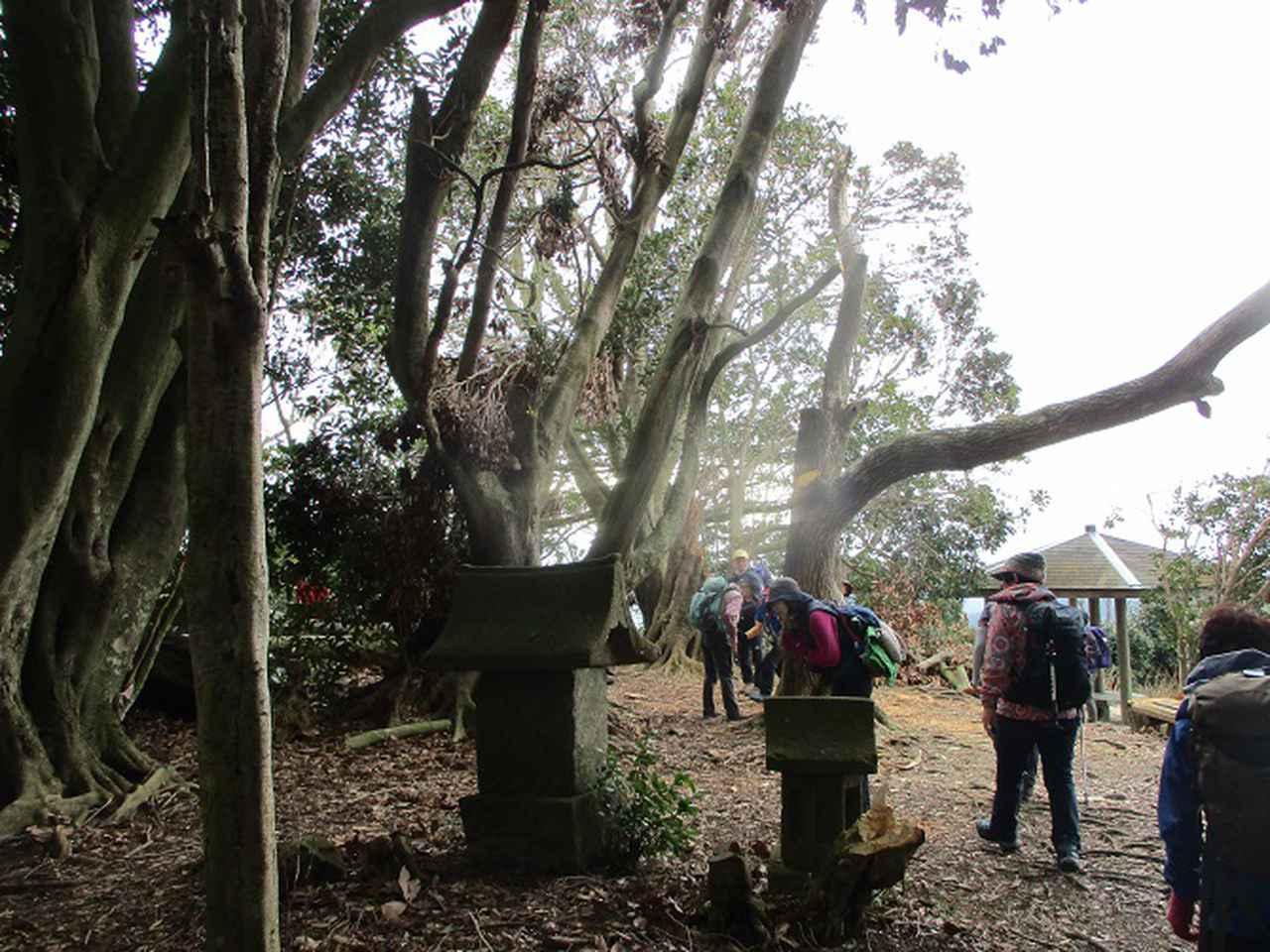 画像7: 2月12日に岡田ガイドのコースで千葉の 御殿山 へ行ってきました♪
